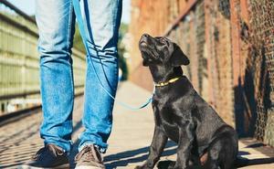 Descubren cómo se produce el síndrome de la domesticación en los animales