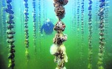 Rosarios de ostras
