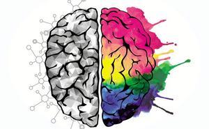 Neurocientíficos descubren cómo las expectativas influyen en la percepción