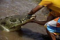 Cuidando al cocodrilo