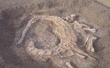 Identificada una extraña nueva especie de 'dinosaurio con pico de pato'