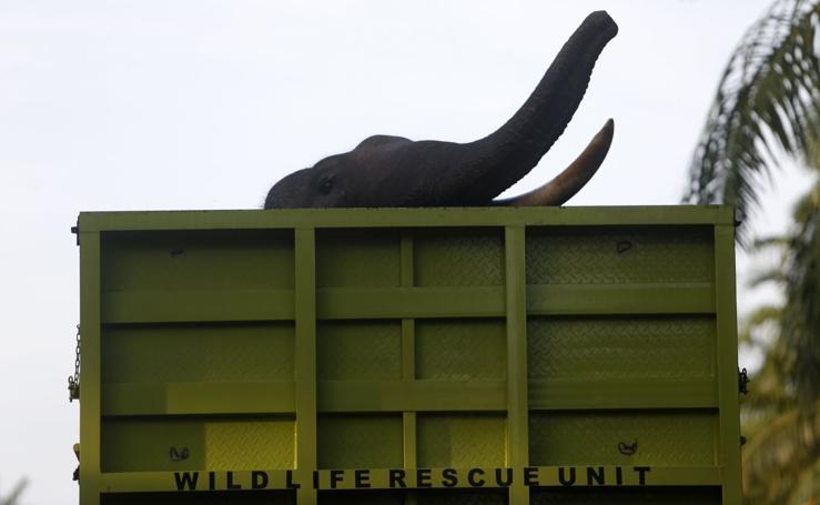 Los últimos elefantes salvajes