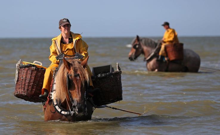 La pesca de gamba a caballo