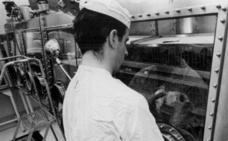 El experimento por el que la NASA dio de comer rocas lunares a cucarachas