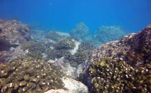 Los episodios de altas temperaturas oceánicas se hacen más frecuentes