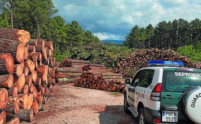 Desarticulada una organización por comercializar madera infectada