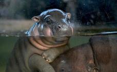 Nacimientos en el Zoo de Taipei