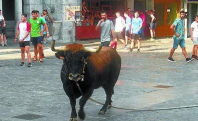 EQUO Berdeak reclama acabar con la 'sokamuturra' en toda Euskadi