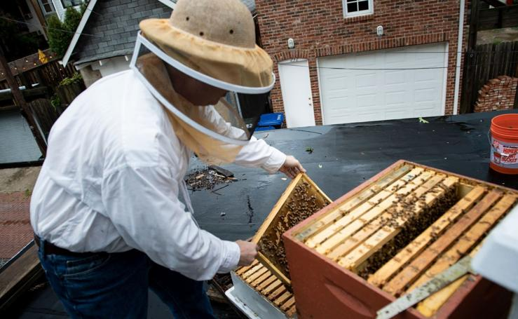 Ser apicultor está de moda en Washington