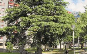 El catálogo de vegetación de Azkoitia contiene más de 600 unidades arbóreas