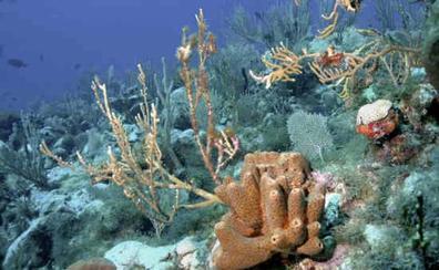 Las esponjas marinas son claves en la lucha contra la crisis climática
