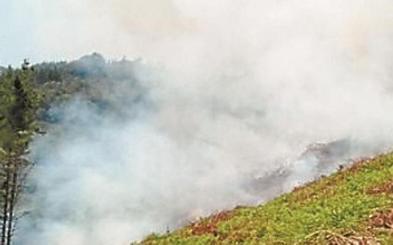 Un incendio forestal arrasa una hectárea de pinar en Bergara