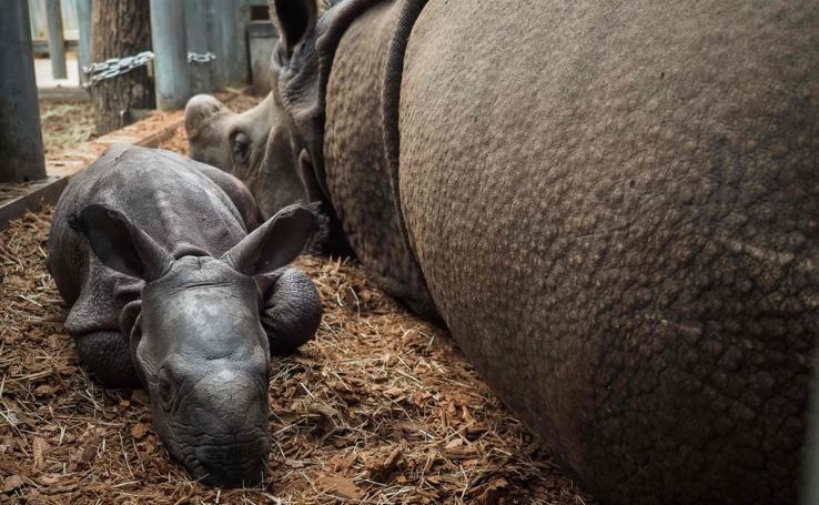 Una visita a los inquilinos del zoo de Beauval