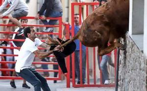 Un toro, a punto de acceder a una casa por la ventana en Navarra