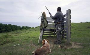 Los cazadores de Gipuzkoa vuelven a cazar