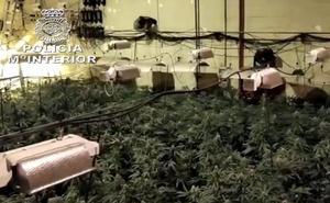 Desmantelado un laboratorio 'búnker' de marihuana en Navarra