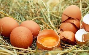 Clasificación de los huevos según sus códigos de numeración