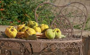 El membrillo, una fruta propia del otoño