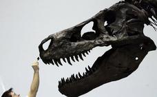 Esta bestia podría haber destrozado un coche a mordiscos sin romperse el cráneo