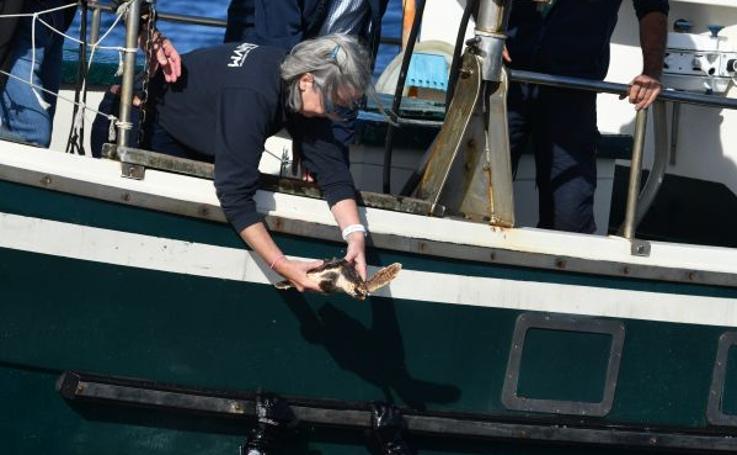 La tortuga Elkano vuelve al mar
