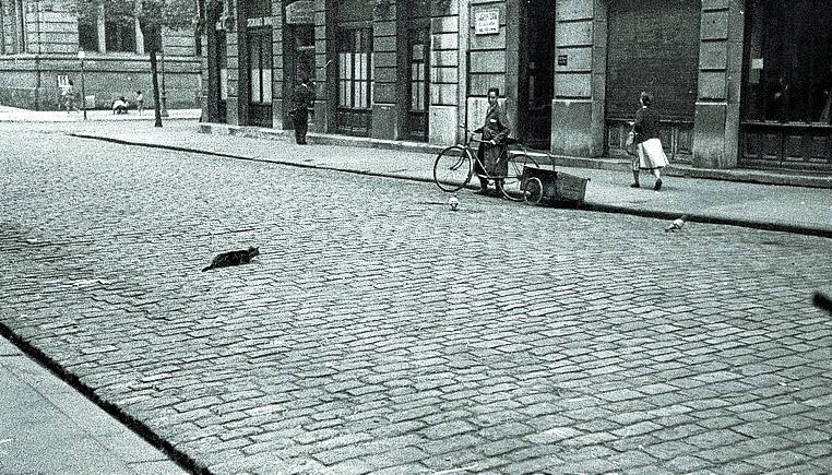 1954 | El gato negro que cayó desde un sexto piso e «hizo ¡plaff!»