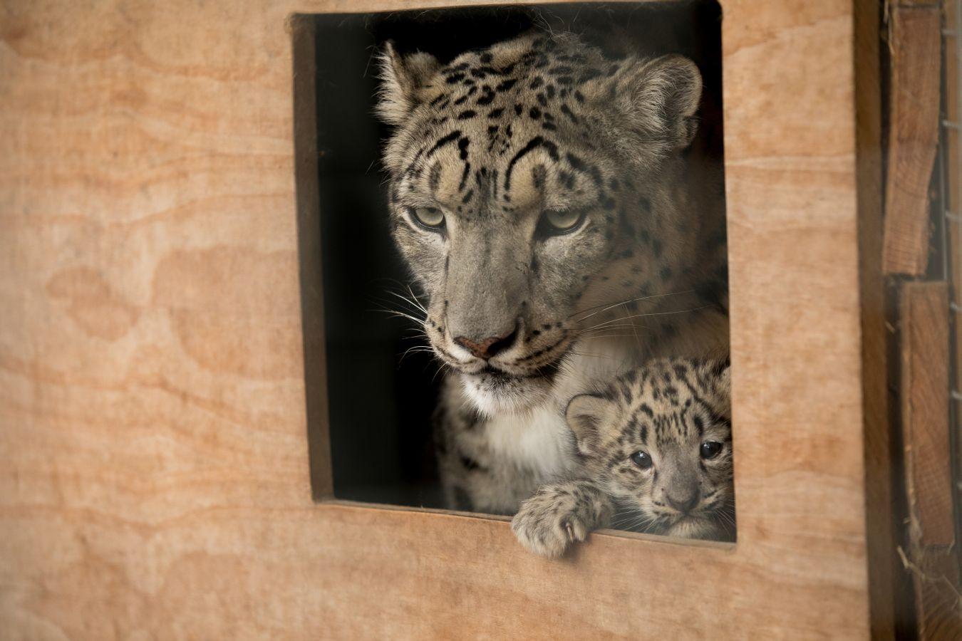 Cachorro de leopardo recién nacido