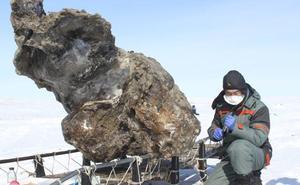 El último mamut murió hace 4.000 años en una isla del Ártico