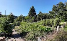 EH Bildu logra el compromiso del Ayuntamiento para que realice un estudio de las huertas