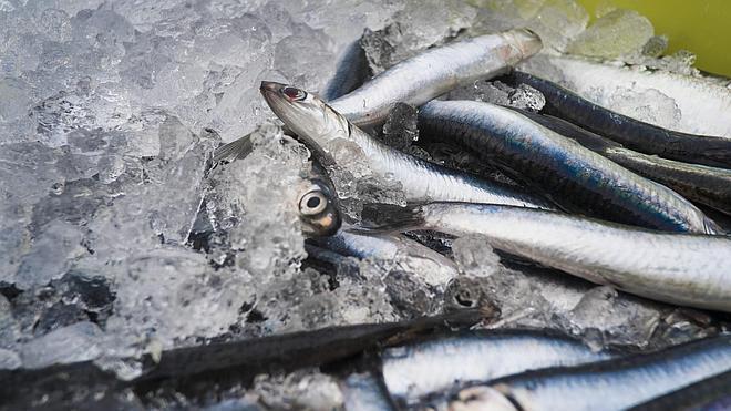 El Gobierno Vasco acusa al central de «romper las reglas del juego» al abrir pesquería