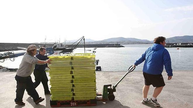 Los científicos aconsejan un recorte fuerte de la pesca de sardina atlántica