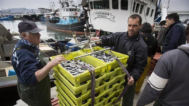 Euskadi urge a Tejerina que proceda al reparto interno de cuotas pesqueras